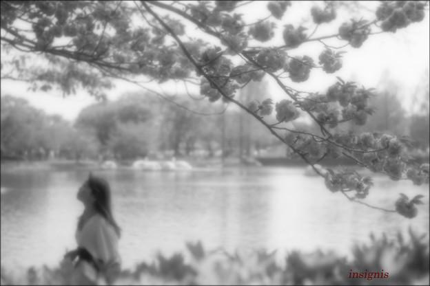 Photos: 桜東風.......