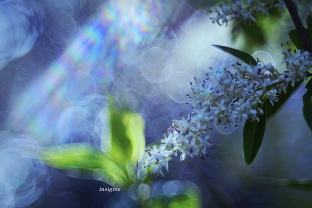 Bubble Dream........
