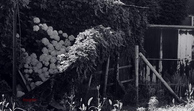 Photos: それでも花は咲いていく......