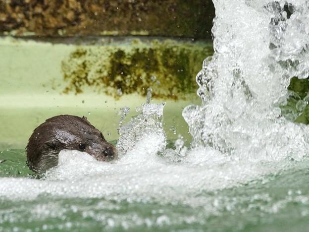 踊る水の合間から、リオちゃん。@安佐