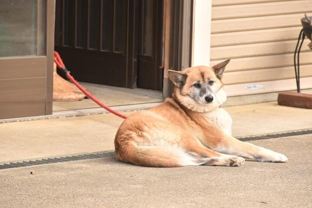 香取神宮参道の犬