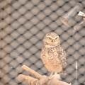 写真: 大宮公園小動物園