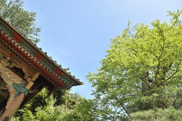 Photos: 狭山不動尊