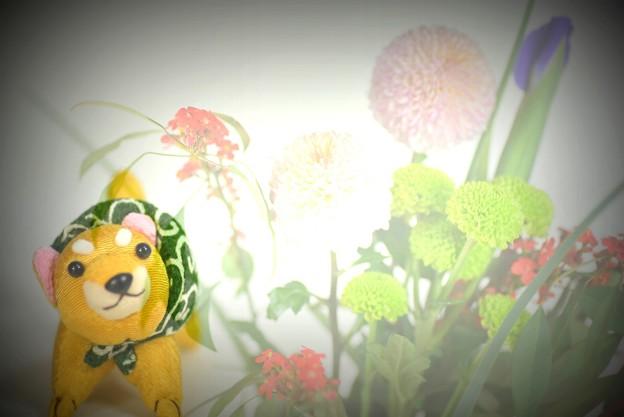 柴犬(お土産)