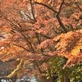 Photos: 円覚寺にて