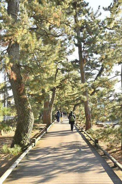 三保の松原 神の道