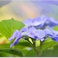 五月雨七変化
