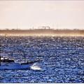 遠くの貨物船