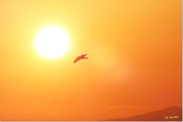 写真: 朝日に向かって