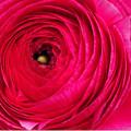 写真: 花占い