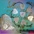 写真: 白蝶貝のギターピック