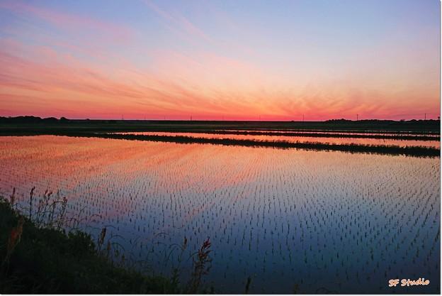 写真: 夜明けの田んぼ