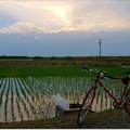 写真: 田んぼの水見