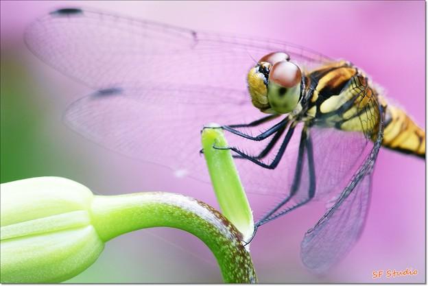 写真: 蜻蛉