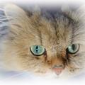 写真: Cat's Eye