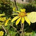 写真: Yellow