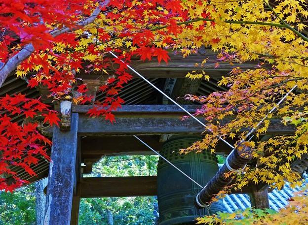 紅葉の丹生寺