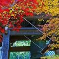 写真: 紅葉の丹生寺
