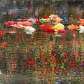 写真: 花の泉