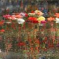 Photos: 花の泉