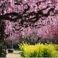 Photos: 花のれん