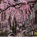 写真: 花かんざし