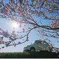 Photos: てんとう虫の春