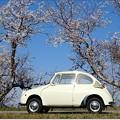 Photos: 春風にのって