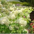 Photos: 春の庭