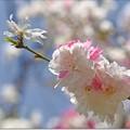 Photos: 春うらら