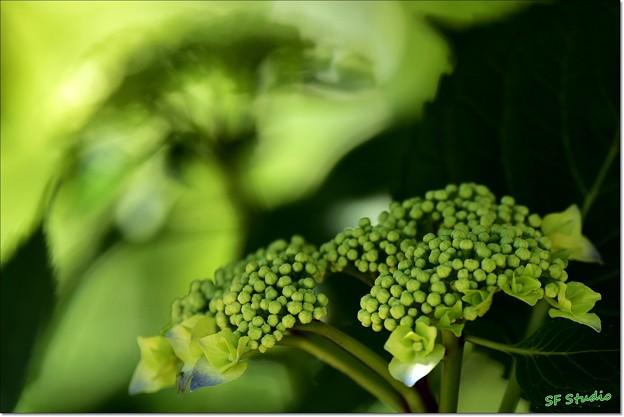 GREEN,green