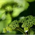 Photos: GREEN,green