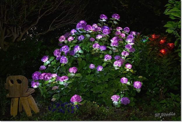 紫陽花のイルミ 1