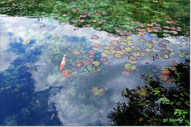 Photos: モネの池