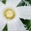 Photos: 純白の輝き