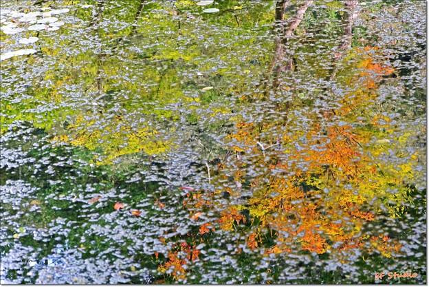 秋のかくれんぼ