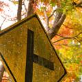 写真: ト in 色付き始める紅葉