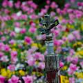 散水栓と花園