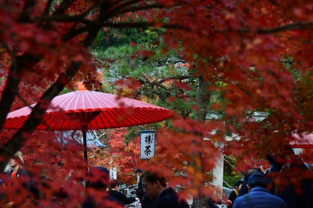 紅葉とお茶席