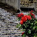 Photos: 薔薇のある風景
