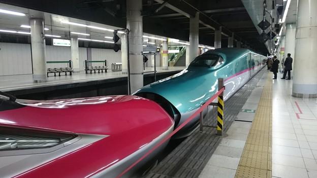 E5系 + E6系 [JR 上野駅]