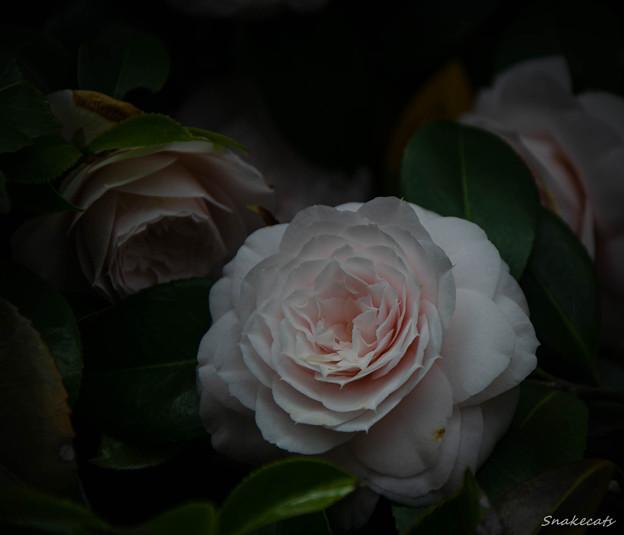 「淡色」 - 城南宮 京都 -