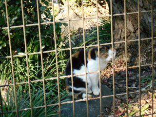 日比谷公園の猫