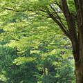Photos: 緑深し