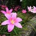 Photos: 6月の花