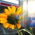 Photos: 夏の交差点