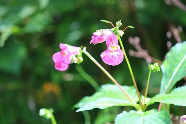 見知らぬ花が…