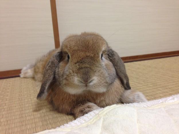 Photos: こまめくん