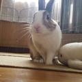 Photos: マロンくん