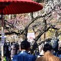 Photos: お茶屋にて